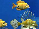 [动作]海底吞食鱼